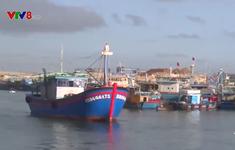 Bình Định: Hơn 3.200 tàu cá được cập nhật hệ thống Vnfishbase