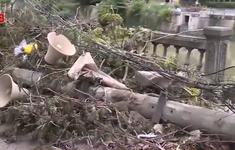 Vì sao hàng trăm cột điện bị gãy đỗ trong bão số 5?