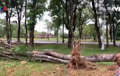 Thừa Thiên - Huế: Nhiều cây xanh ngã đổ do cơn bão số 5