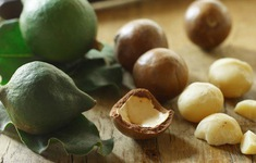 Macca - Cây trồng mang lại hiệu quả kinh tế cao