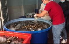 Bắt quả tang 1,3 tấn ốc tẩm hóa chất chuẩn bị bán ở chợ, quán ăn