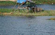 Vẫn chưa thể bắt được cá sấu trong hồ nước sát khu dân cư