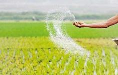 Sri Lanka phát hiện vi khuẩn gây hại trong lô phân bón Trung Quốc