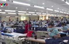 Quảng Trị: Tập trung ổn định sản xuất và phòng chống dịch