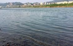 Nước sông Hồng chuyển màu trong xanh
