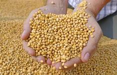 Giá nông sản thế giới tăng vọt, nhiều nước châu Âu bối rối