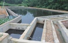Vi phạm quy định về xử lý chất thải chăn nuôi bị phạt đến 20 triệu đồng