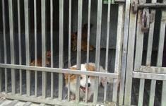 Từ ngày 20/4, đánh đập, hành hạ thú nuôi sẽ bị phạt đến 3 triệu đồng
