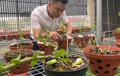 Doanh nhân Nguyễn Văn Thắng sở hữu vườn lan Var độc đáo trên sân thượng