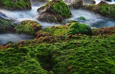 Mê mẩn thảm rêu xanh ấn tượng ở biển Nha Trang