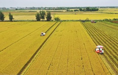 Vì sao cánh đồng lớn... chưa lớn?