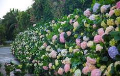 Đặc sắc lễ hội hoa Sầm Sơn