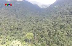 Chính phủ đồng ý chuyển 360 ha rừng vào KCN Triệu Phú, Quảng Trị