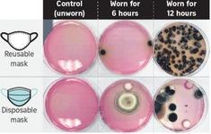 Tiết lộ hình ảnh vi khuẩn trên khẩu trang sau 12 giờ sử dụng