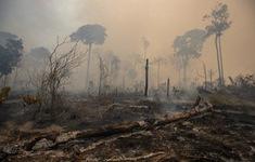 Amazon mất 2,3 triệu ha rừng nguyên sinh trong năm 2020