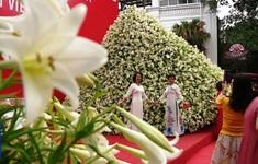 Chiêm ngưỡng nón hoa loa kèn lớn nhất Việt Nam