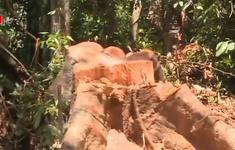 Vẫn nóng tình trạng phá rừng giáp ranh