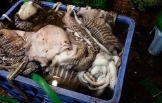 """Mực thối tẩy trắng vào nhà hàng ở chợ Long Biên: Lỗ hổng """"chết người"""" ở đâu?"""