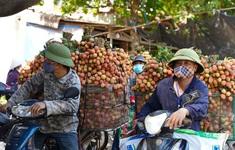 Hơn 98.000 tấn vải thiều Bắc Giang đã được tiêu thụ