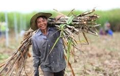 Chính thức áp thuế chống bán phá giá với đường mía từ Thái Lan