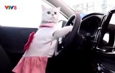 """Người mẫu mèo """"làm mưa làm gió"""" tại triển lãm ô tô"""