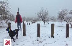 Tuyết rơi dày tại Argentina sau 14 năm