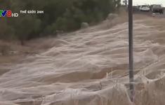 Mạng nhện bao trùm vùng nông thôn Australia