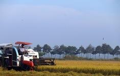 Hệ thống lương thực thực phẩm Việt Nam đối mặt nhiều thách thức