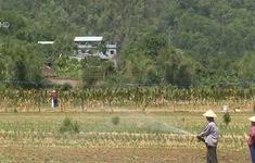 Thiếu nước sinh hoạt và sản xuất do nắng hạn kéo dài tại Quảng Nam