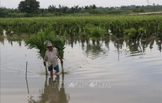 Lũ sông Cửu Long chính vụ năm nay tiếp tục thấp