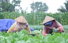 Hỗ trợ rau xanh cho người dân vùng dịch