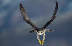 9 loài động vật nhanh nhất thế giới