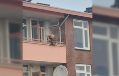 Tấn công bằng nỏ khiến 2 người thiệt mạng, 1 người bị thương ở miền Đông Hà Lan