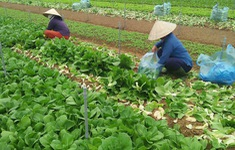 Hà Nội tăng tốc phục hồi và thúc đẩy sản xuất nông nghiệp
