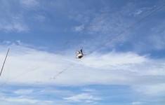 Về đâu những cánh chim trời: Những tấm lưới chết chóc
