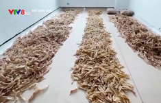 Colombia tịch thu lô hàng gần 3.500 vây cá mập