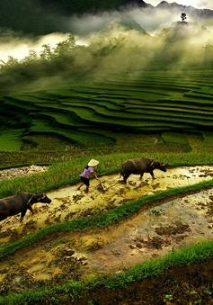 Triển lãm ảnh Di sản Việt Nam 2014: Phác họa vẻ đẹp cuộc sống