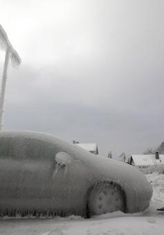 Nhật Bản: Bão tuyết bất ngờlàm 7 người thiệt mạng