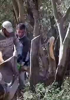 """Cây xanh bị chặt """"vô tội vạ"""" ở Syria"""