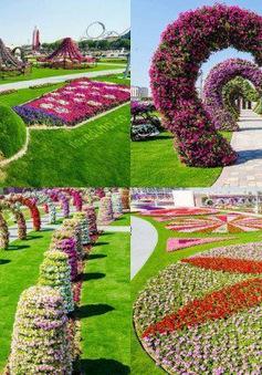 Dubai Miracle Garden - Công viên hấp dẫn nhất thế giới