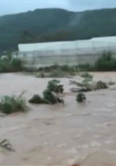 Đà Lạt: Mưa lớn kèm lốc xoáy, nhiều nơi ngập nặng
