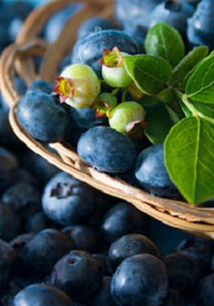 11 thực phẩm cung cấp collagen tự nhiên cho da