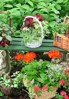 Những chậu cây ngộ nghĩnh cho sân vườn thêm xinh