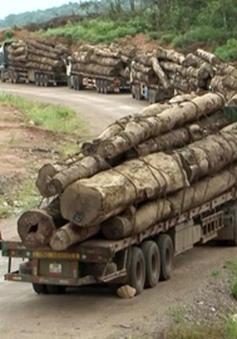 Bộ Tài chính gỡ vướng về nhập khẩu gỗ tại cửa khẩu La Lay