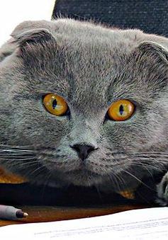 Chú mèo trở thành... Giám đốc truyền thông
