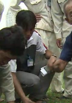 Nhật Bản hỗ trợ VFF chăm sóc mặt cỏ sân tập