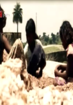 Mồ hôi của trẻ em nghèo Ấn Độ tại những mỏ Mica