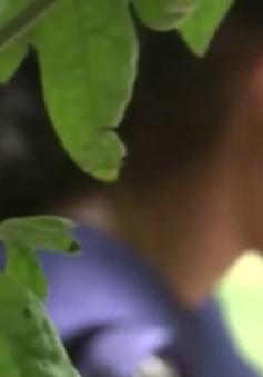Nỗi ám ảnh vấn nạn tảo hôn tại Ấn Độ