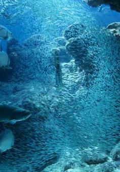 Số lượng sinh vật biển giảm một nửa kể từ năm 1970