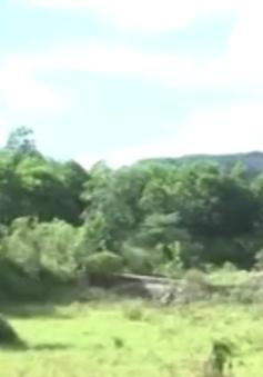 TT-Huế: Dự án bãi chôn lấp rác gần 9 tỷ đồng bị bỏ hoang